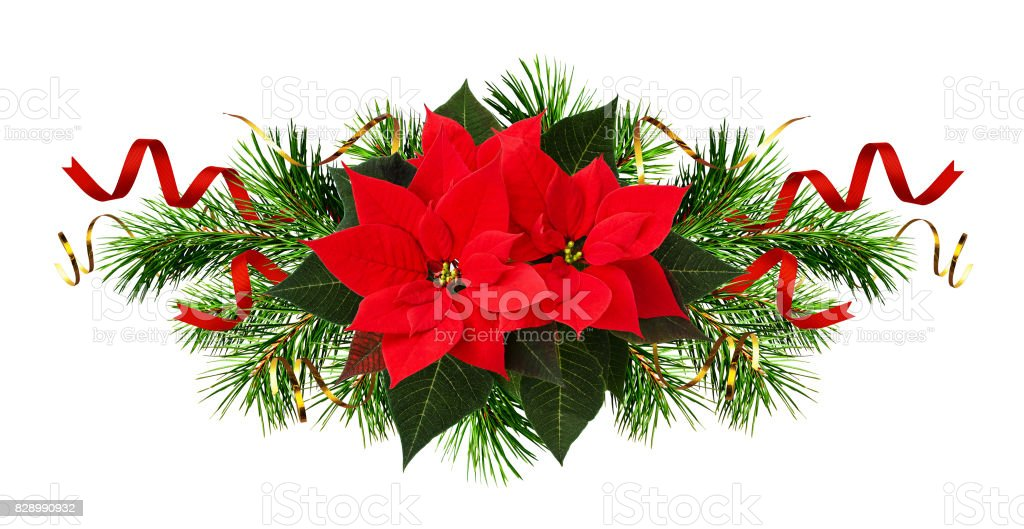 Red poinsettia flowers and Christmas decorations stock photo