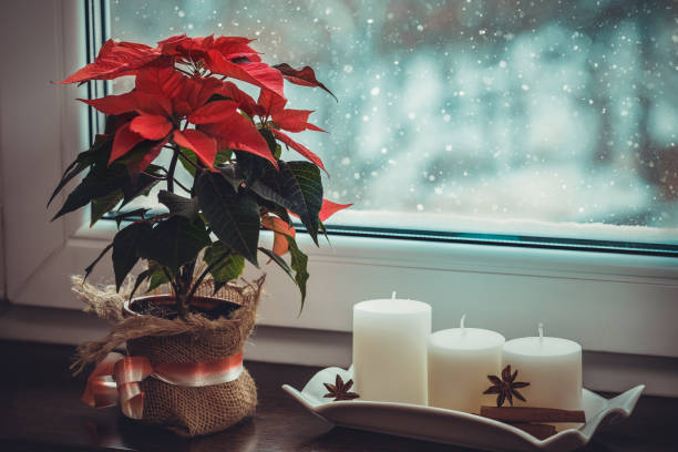 rode poinsettia, traditionele kerst bloem en kaarsen op de vensterbank van een winter ruit. - kerstster stockfoto's en -beelden