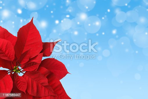 A close up of a red poinsettia in front of a blue background of blurred lights and falling snow.