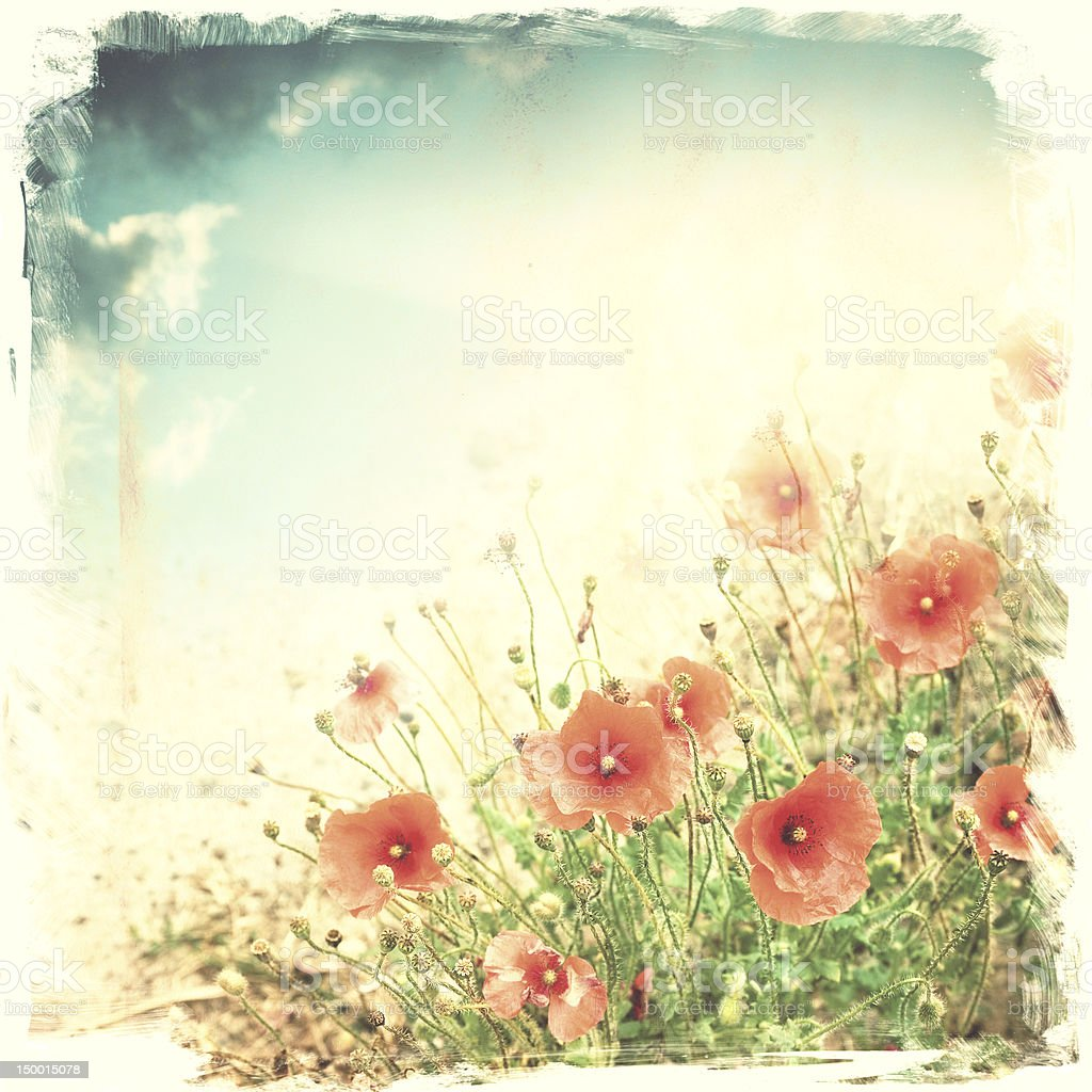 red poppies against sky stock photo