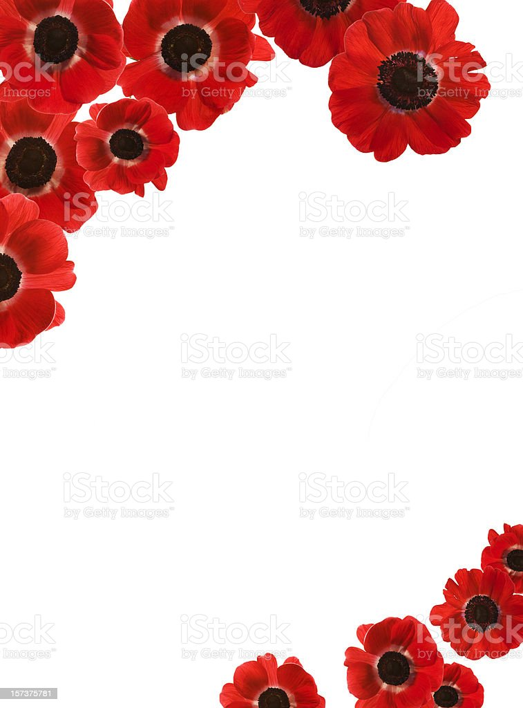 Red Poppies Border with copy space (XXXL) stock photo