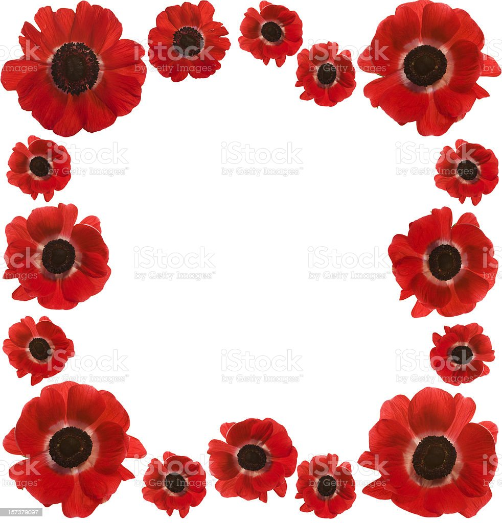 Red Poppies Frame with copy space (XXL) royalty-free stock photo