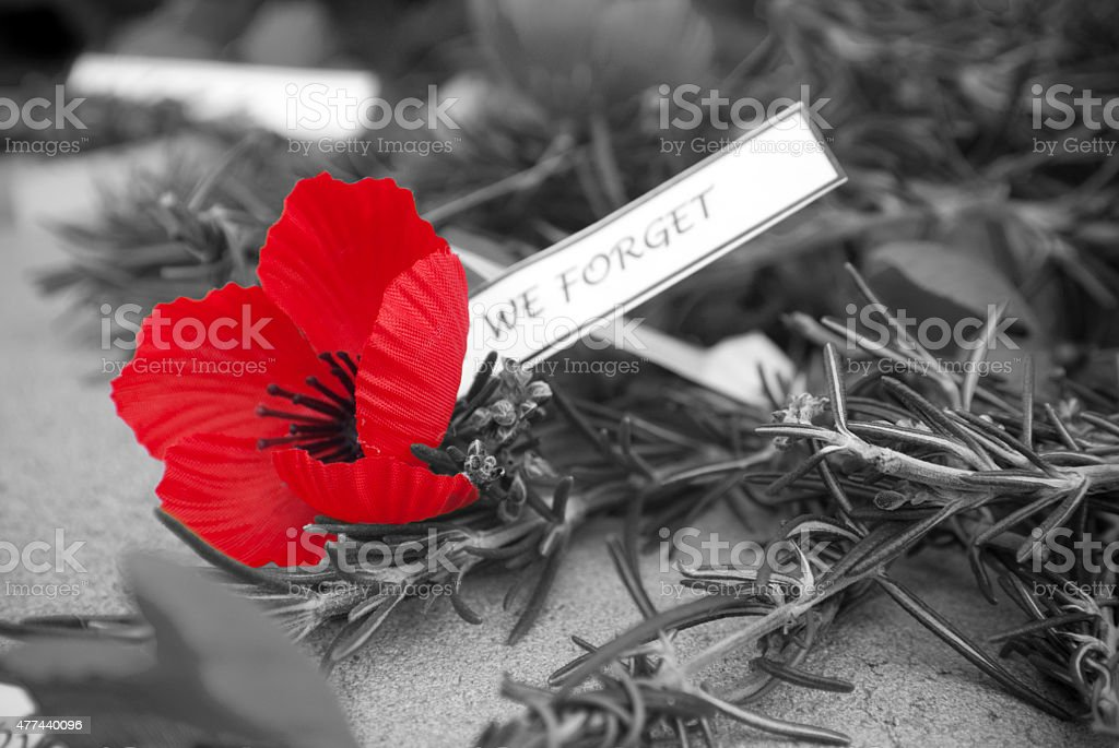 Red poppy and rosemary on Anzac day stock photo