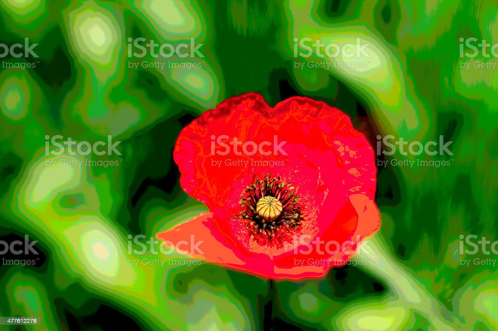 Red Poppy, Blowing in the Wind (Posterized) stock photo