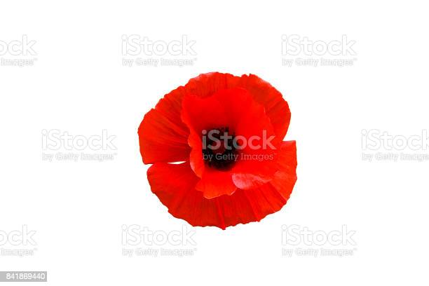 Red poppy flower isolated on white background, top view