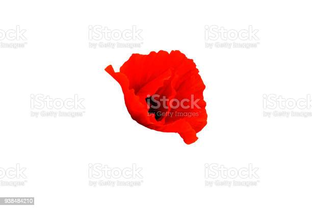 Red poppy flower isolated on white side view picture id938484210?b=1&k=6&m=938484210&s=612x612&h=yhe0 w92ha3lhm3rxflbhra46qh21me7xgnoh148jqu=