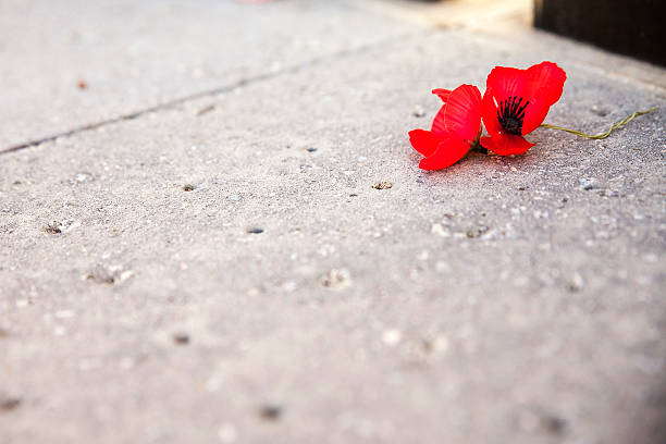Red poppy flowers laying on a concrete sidewalk