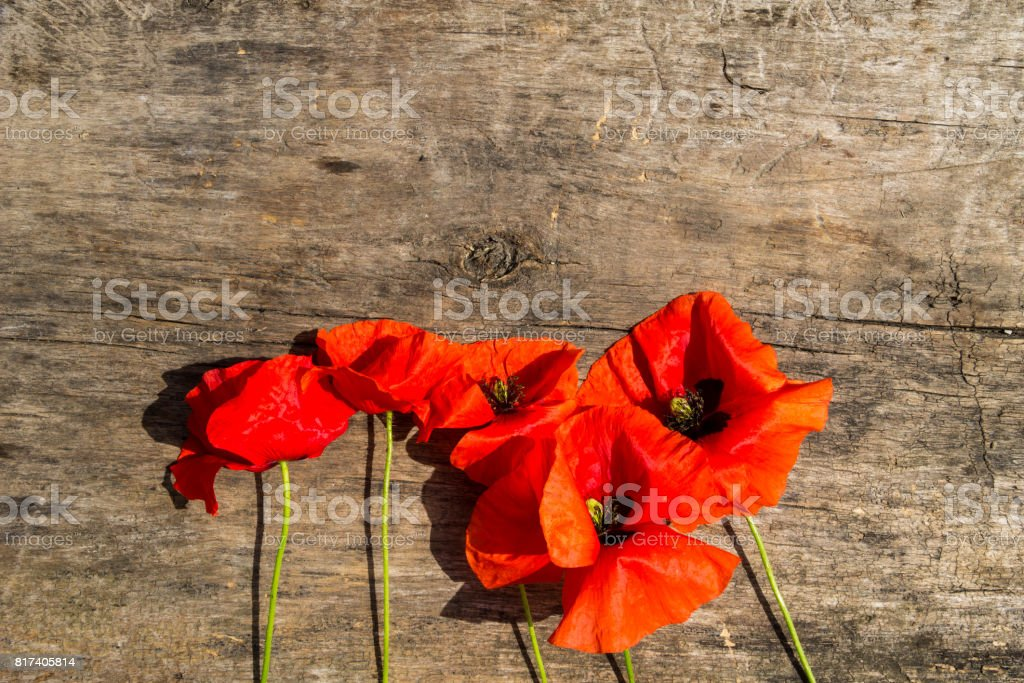 Red poppy flowers on wooden background stock photo