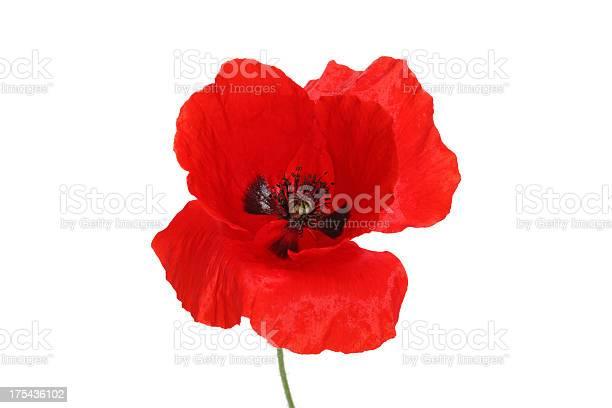 Red poppy picture id175436102?b=1&k=6&m=175436102&s=612x612&h=wxz64r h2vwqca qaa7zmh63oclgc7m6c7zgci8r0xo=
