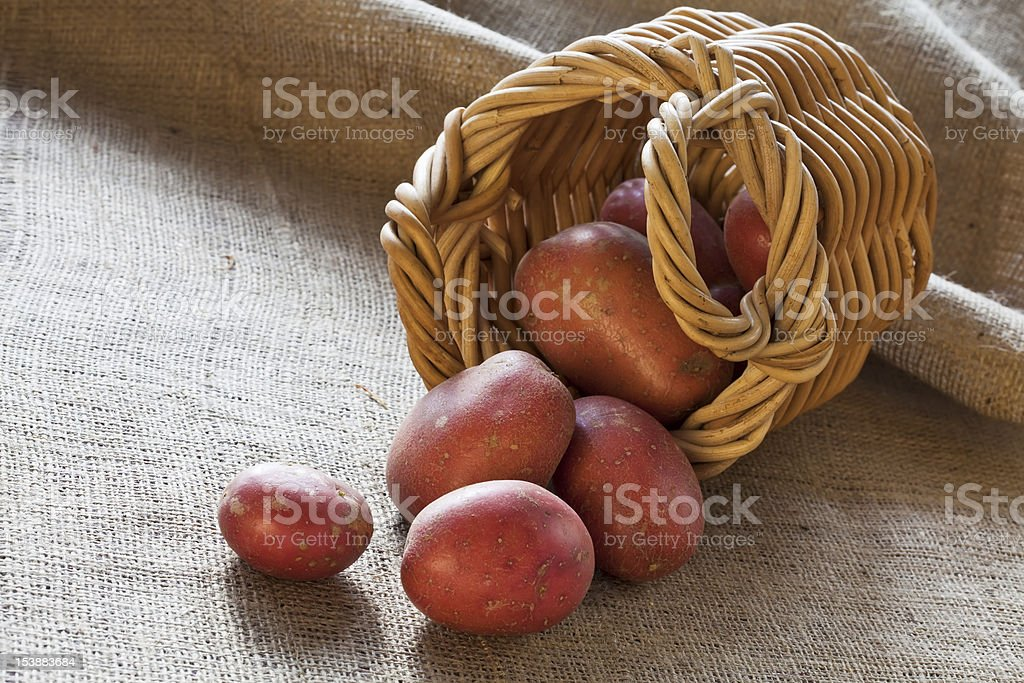 Red potatoes scattered from wicker basket stock photo