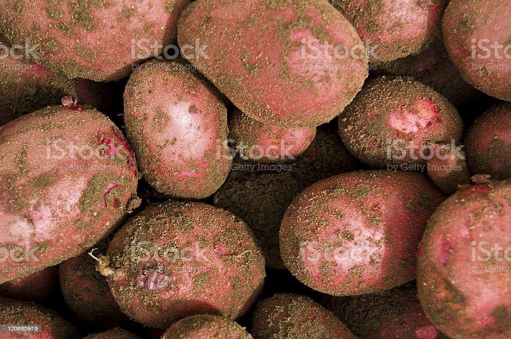 Red potatos royalty-free stock photo