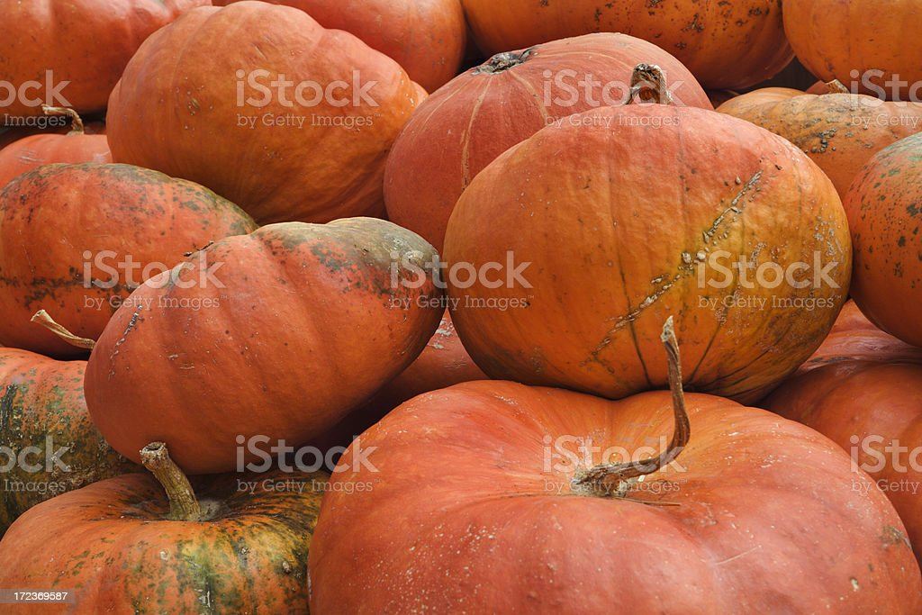 Red Pumpkin Squash Pile royalty-free stock photo