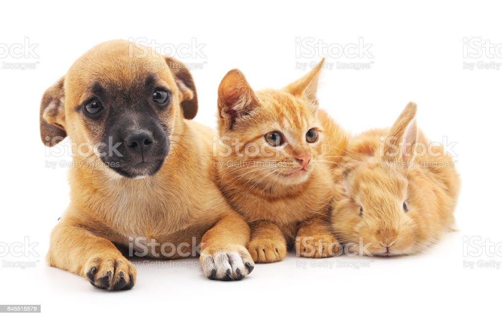 Red puppy, kitten and bunny. stock photo