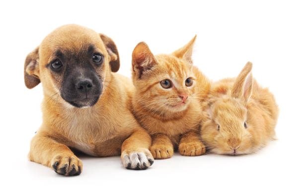 red puppy, kitten and bunny. - rabbit stock photos and pictures