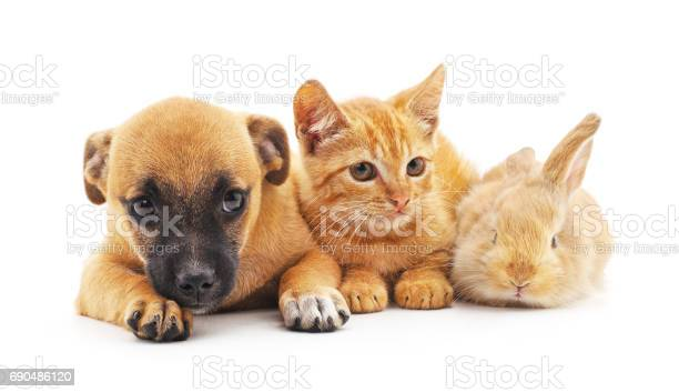 Red puppy kitten and bunny picture id690486120?b=1&k=6&m=690486120&s=612x612&h=yxs7 ompcfjuhwqw w9smrovne6pevssrb12 vmgamw=