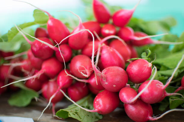 Red Radishes Found at the Farmer's Market stock photo