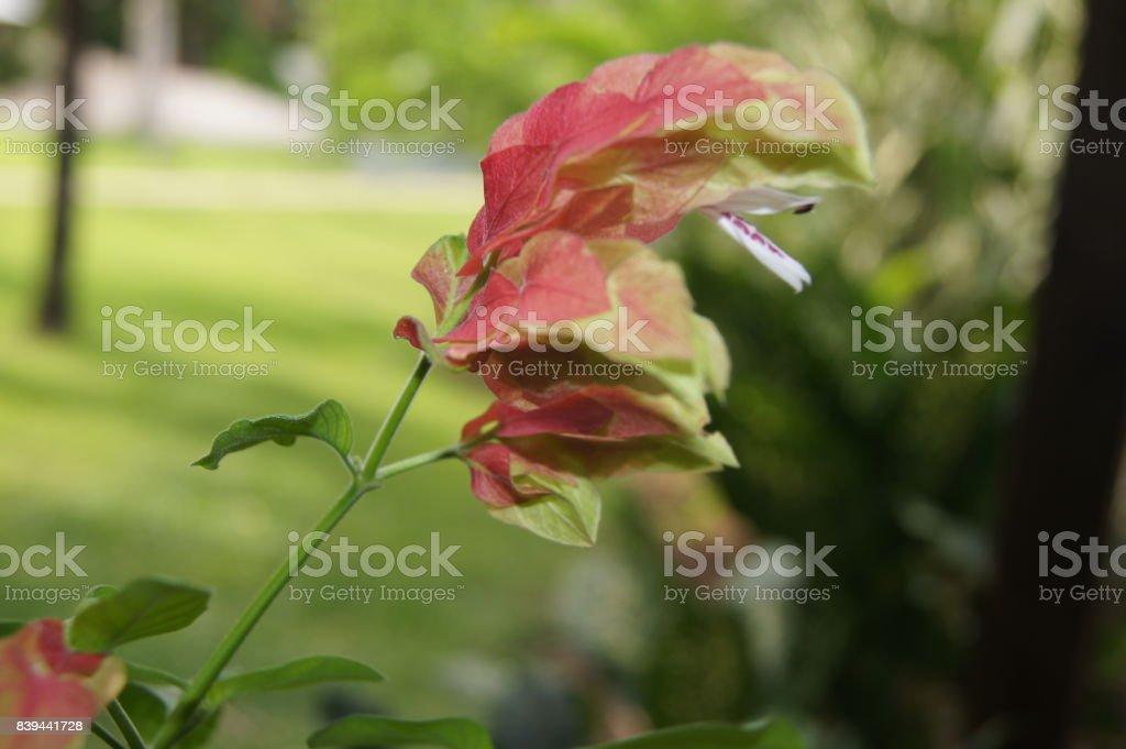 Red Rainforest Plant stock photo