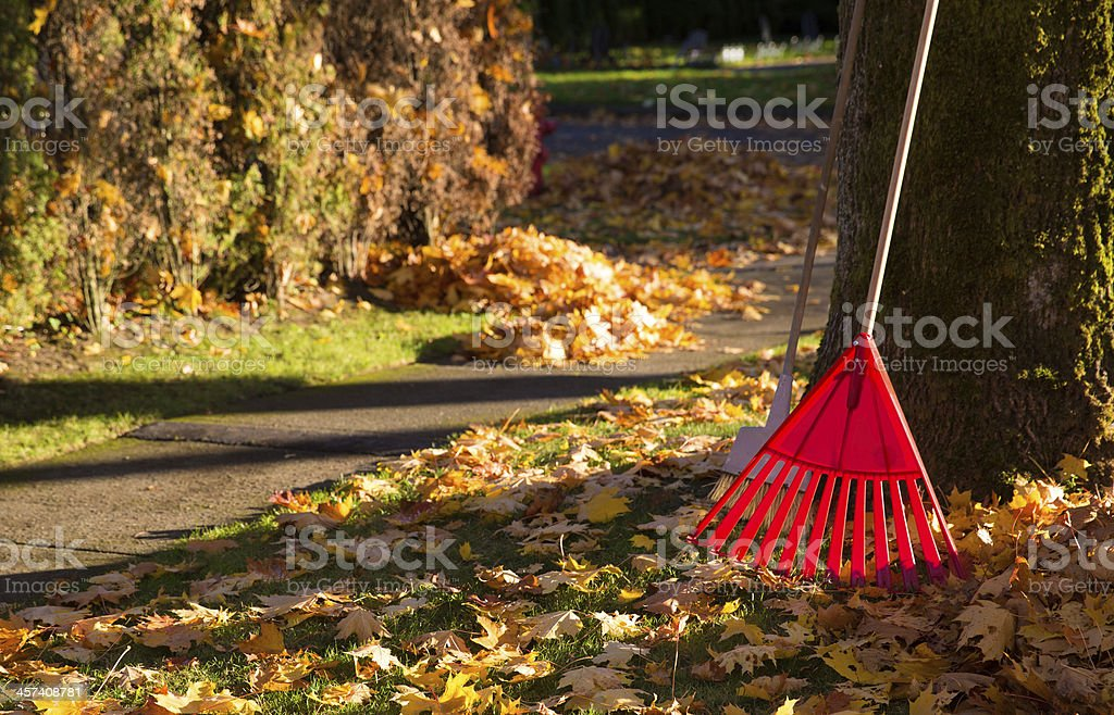 A red rake clearing a pile of autumn leaves stock photo
