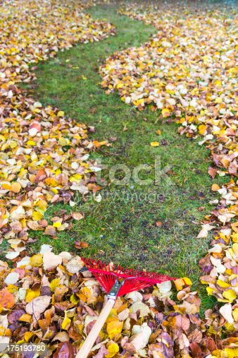 Raking a leaf covered yard from the rake point of view. the rake makes a clear path zig zagging off into the distance.