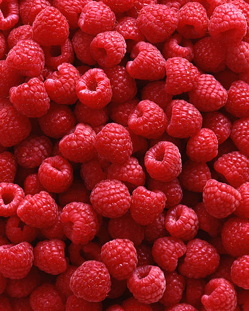 red raspberries as background 4x5 film - hallon bildbanksfoton och bilder