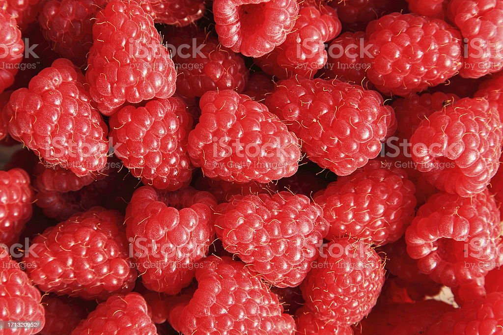 Red Raspberry (Rubus idaeus) stock photo