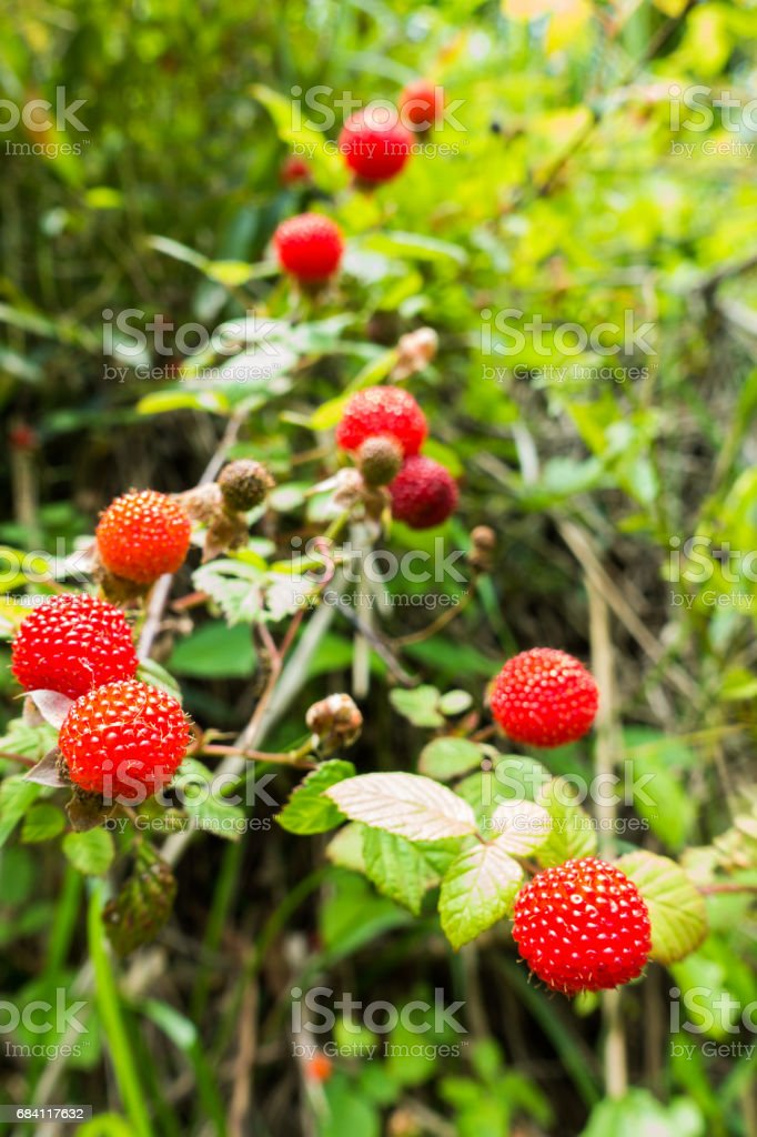 Red raspberry foto stock royalty-free