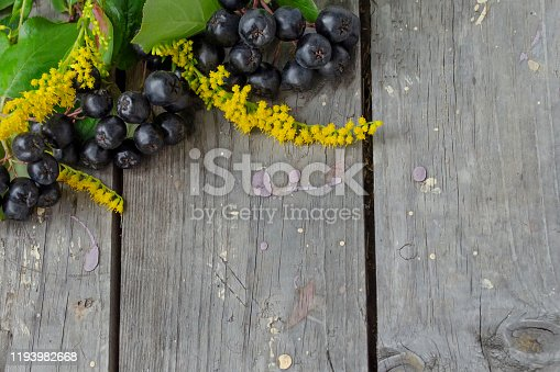 istock Red ripe berries of chokeberry, aronia (Aronia melanocarpa) and yellow goldenrod flowers (Solidago) on a wooden background. Flat lay. Top view. 2 1193982668