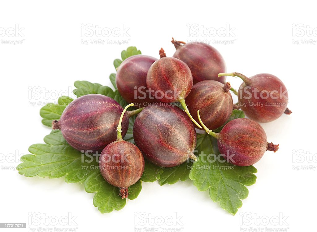 Red ripe gooseberry royalty-free stock photo