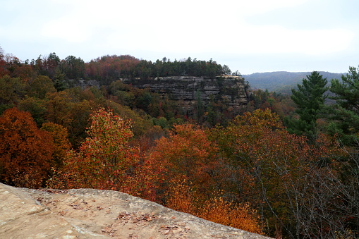 A waterfall located in the Red River Gorge of Kentucky.