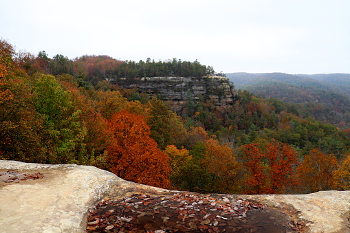 Autumn scenery in the Red River Gorge.