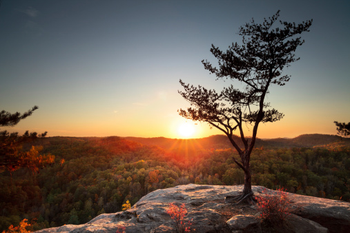 A lone tree stands on a rocky outcrop during sunset at Natural Bridge State Park, Kentucky.