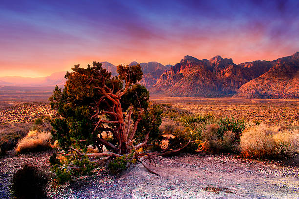 red rock canyon, nevada - red rocks stock pictures, royalty-free photos & images