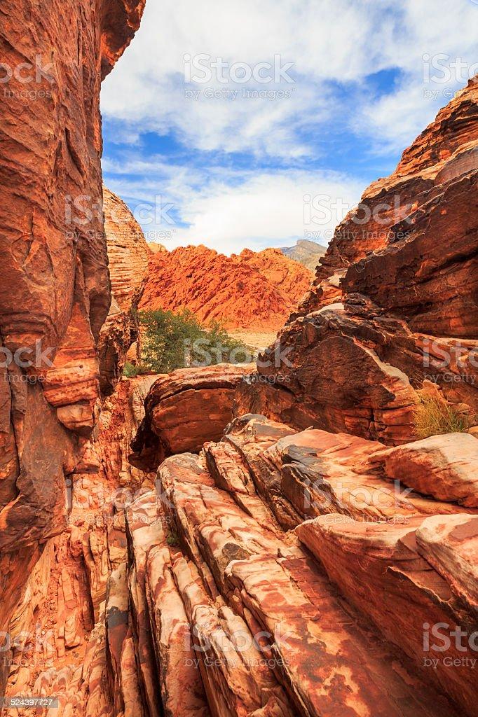 Red Wolf - Fossil Rim Wildlife Center