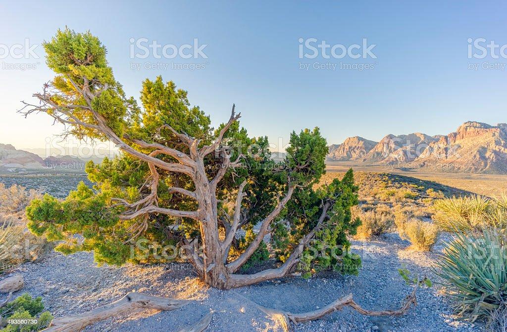 Red Rock Canyon - foto de acervo