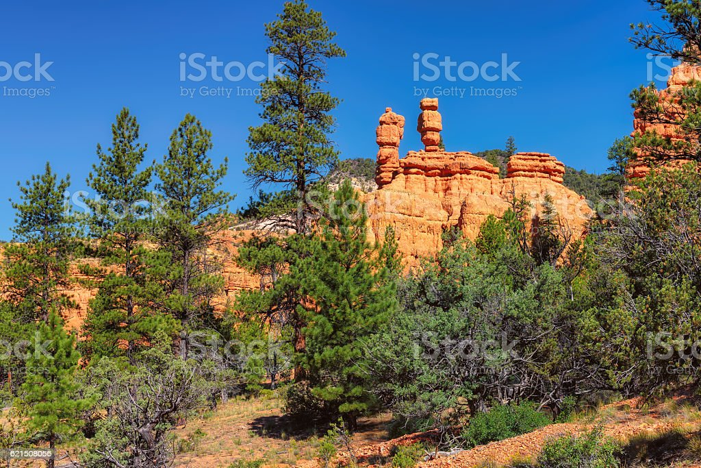 Red rocks and green trees photo libre de droits
