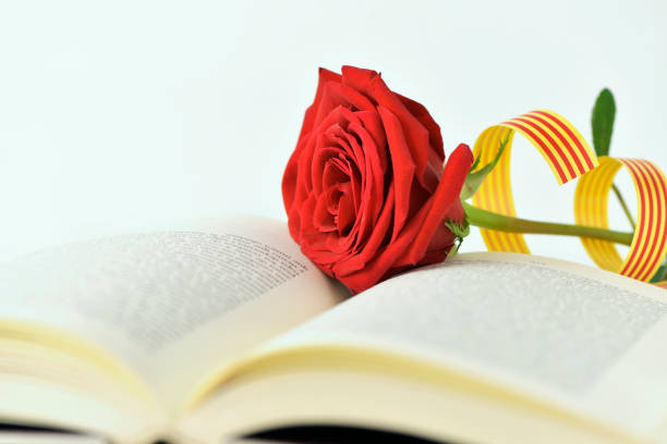 red rose and catalan flag in an open book stock photo