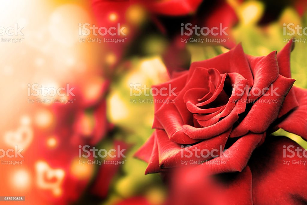 Red rose and heart bokeh. Valentine's Day. stock photo