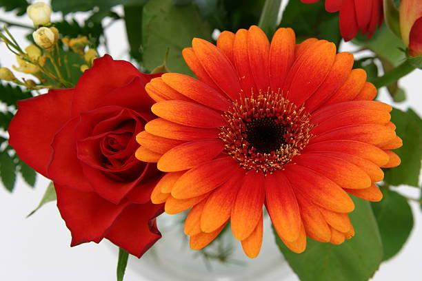Red rose and orange gerbera picture id90397489?b=1&k=6&m=90397489&s=612x612&w=0&h=7immyztr3jof woimsv7fhhnitmhfplisg7e9lbhm4i=
