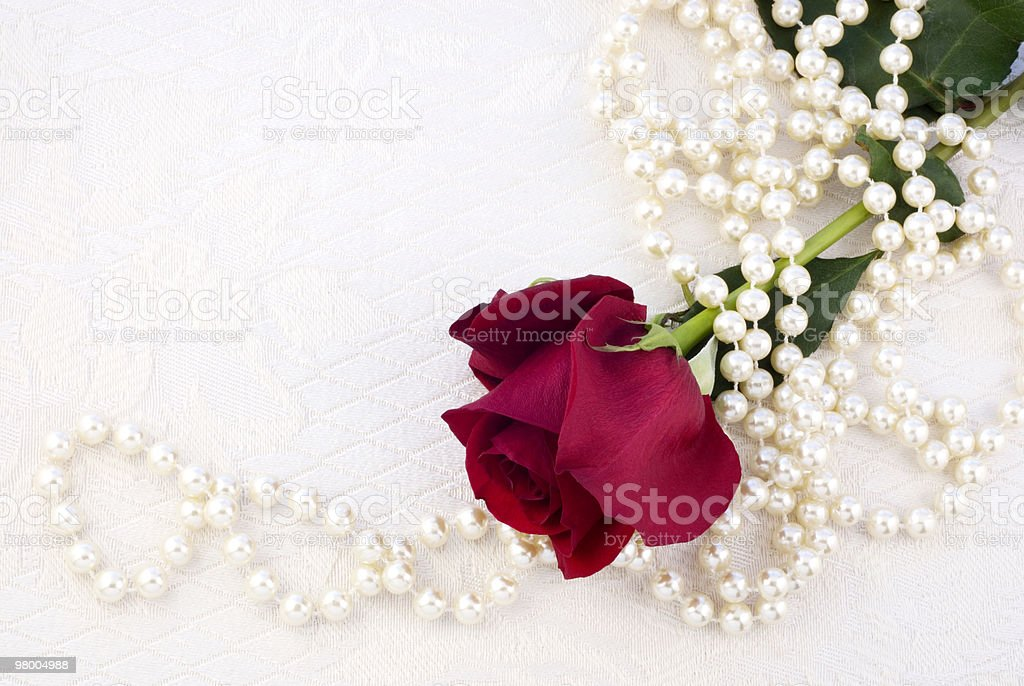 Red Rose and Pearls stock photo