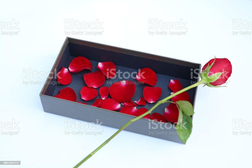 Red rose and petals in luxury leather box on white background. Стоковые фото Стоковая фотография
