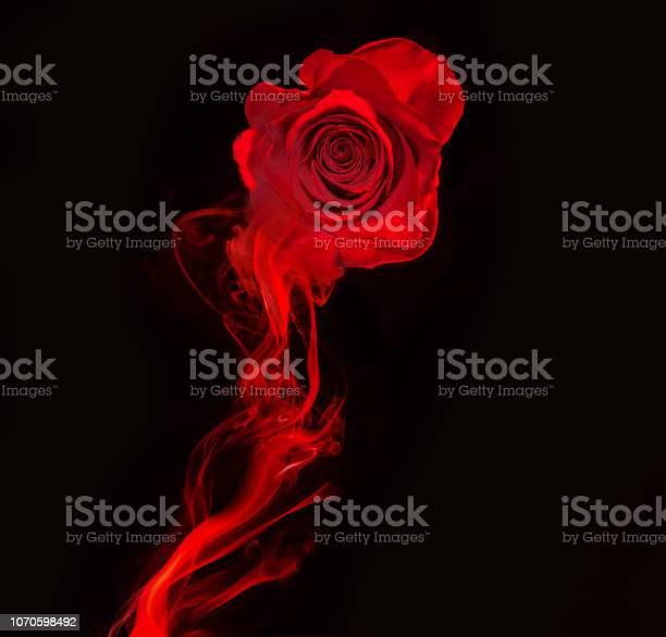 Red rose and smoke swirl on black picture id1070598492?b=1&k=6&m=1070598492&s=612x612&h=tpgicqw5dr15 okw5hlqj0ekzqqc9wjc0d0svdu2ark=