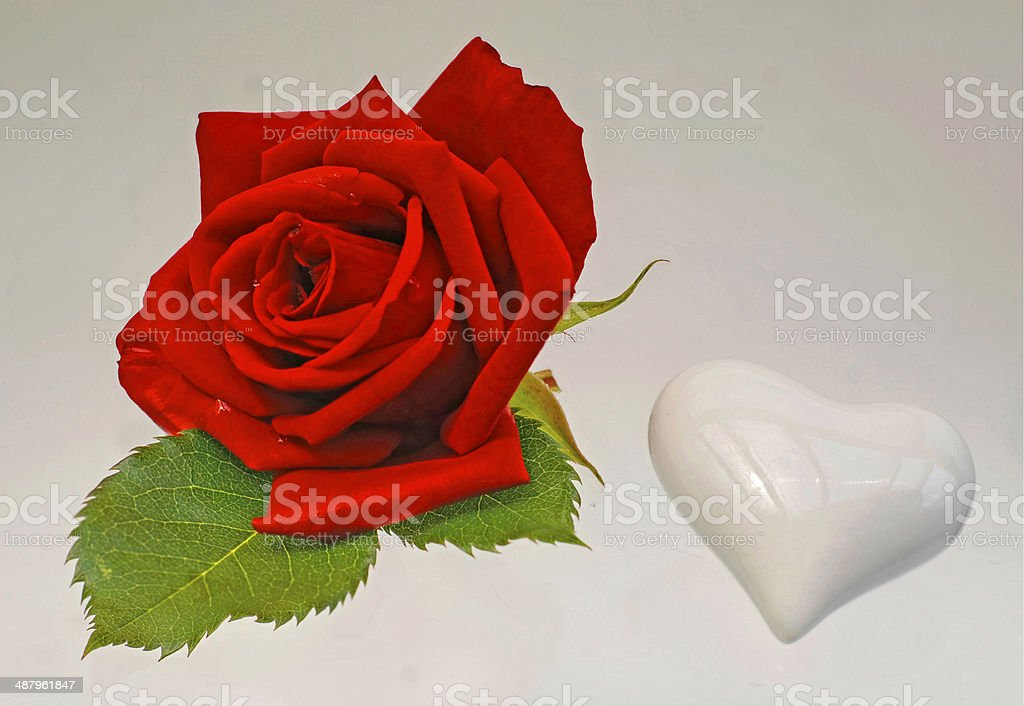 Red Rose and White Heart stock photo