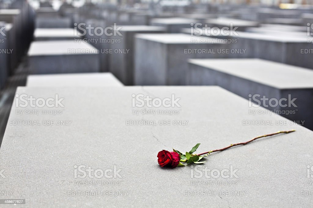 Red Rose at Holocaust Memorial in Berlin, Germany stock photo