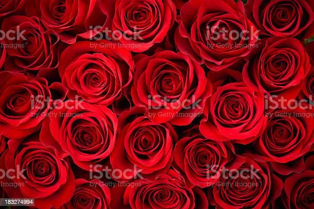 Red rose background picture id183274994?b=1&k=6&m=183274994&s=612x612&h=lpq7qm45igjdeogjqpg0oqiz4 40rglyoc4m80wm9ay=