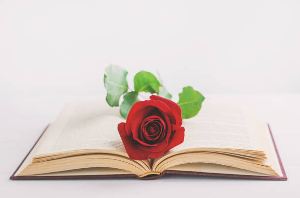 Red rose flower at opened old book with vintage tone stock photo