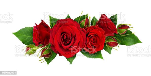 Red rose flowers and leaves in a line arrangement picture id939185994?b=1&k=6&m=939185994&s=612x612&h=xr2ktpz1uvdfgf5hmntrk 7vpd rd6i6xhrd4c9gfrm=