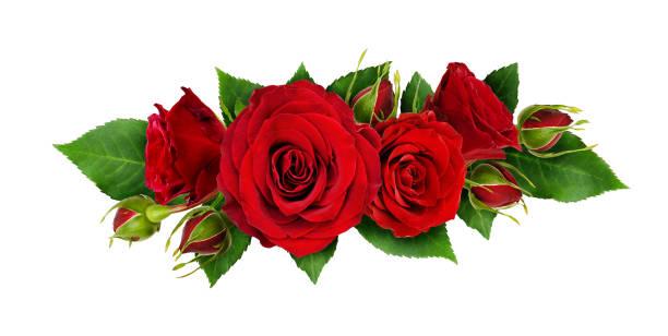 fleurs roses rouges et des feuilles dans un arrangement de ligne - damas en matière textile photos et images de collection