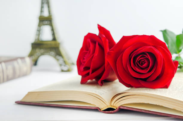 Red rose flowers at opened old book with vintage tone stock photo