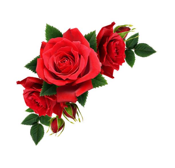 Red rose flowers in corner arrangement picture id916122472?b=1&k=6&m=916122472&s=612x612&w=0&h=ywhkvgkgtywsankvqom74vo26g6bofxa ns7h1zr6dk=