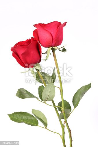 Red color, Rose flower, Flower, Nature, Beauty, Romance